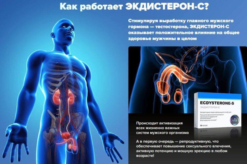 Ecdysterone-S стимулирует способности мужчин и половую силу